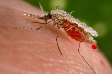 Malaria on the rise in Limpopo and Mpumalanga